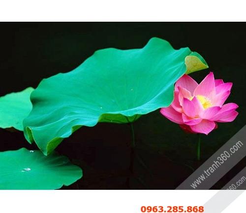 hoa sen dep 03